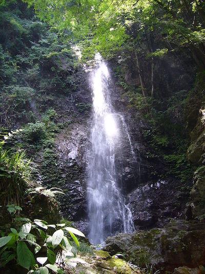 ヒルナンデスで紹介の檜原村の払沢の滝